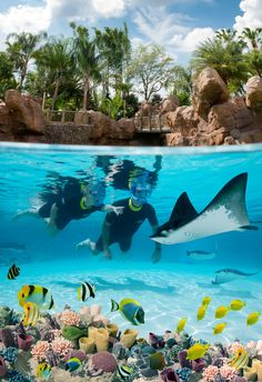 The Grand Reef at Discovery Cove tropical retreat - Orlando, Florida, USA