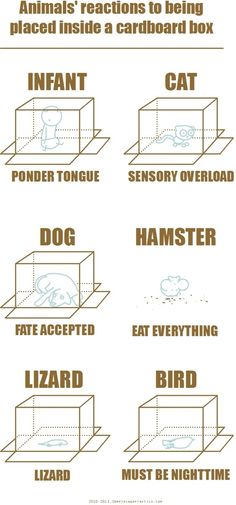 Animals' reactions to being placed inside a cardboard box #funny #cats #lol