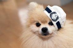 Pomeranian (mine would never wear a hat. she hates them!)