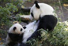 Adorables bébés animaux et leur mère: 50 petits et leur maman! (PHOTOS)