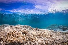 Third Time's a Disaster: Latest Coral Bleaching Hits Reefs Worldwide | TakePart