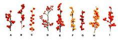 For Breathtaking Color, Try Winterberry Holly: The Berries of Various Winterberry or Winterberry Holly (Ilex verticillata)