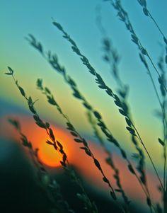 Sunset in a field .......