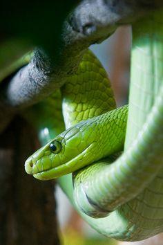 eqiunox: Tree Snake