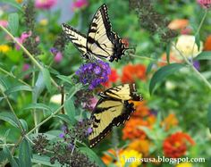 I love butterflies!