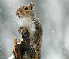 Small Game: Late-Season Squirrel Hunting Tips | Field & Stream