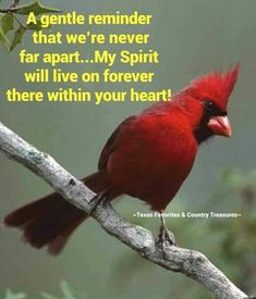 I smile when I hear or see you! Missing our time together. Love you son. Cardinal Birds, Red Cardinal Meaning, Ladybug Meaning, Loved One In Heaven, Miss You Mom, Thank You Jesus, Quotable Quotes, Trust God, Cardinals