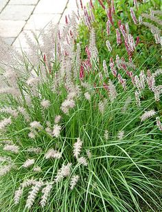 De tuin in augustus met soorten siergrassen met wuivende bloeipluimen - bloeiende siergrassen in de siertuin Hillside Garden, Dry Garden, Garden Care, Garden Plants, White Gardens, Small Gardens, Outdoor Gardens, Prairie Planting, Prairie Garden