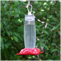 The Garden Song® Rose Petal ™ Hummingbird Feeder includes perches at each of he four feeding ports for hummers to rest. What's even better is an ant moat is built right in! Hanging Bird Feeders, How To Attract Hummingbirds, Wild Birds, Rose Petals, Ants, Planting Flowers, Holiday Decor, Outdoor Decor, Garden