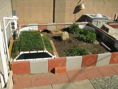 Tortoise outdoor enclosure - lots of pic's & ideas