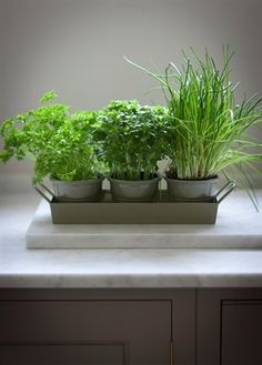 Herb planter for windowsill