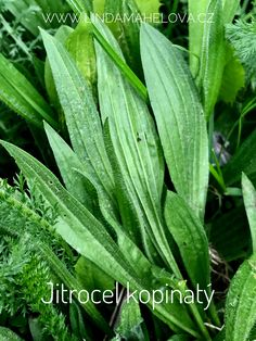 Natural Cures, Plant Leaves, The Cure, Herbs, Nature, Plants, Naturaleza, Herb, Planters
