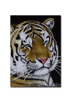 TIGER 14 portrait big cat feline pencil painting Sandrine Curtiss Art Limited Edition Print ACEO by Sandrinesgallery