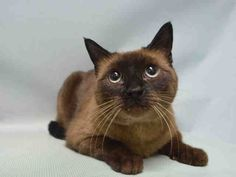 A1099482 – NUTELLA ..URGENT, Brooklyn. Please share!
