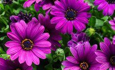 Kapkörbchen: Farbenfrohe Sommerblumen