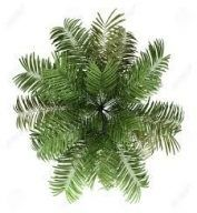 Best Plants Png Interior Rendering Ideas Tree Photoshop Tree Plan Photoshop Trees Top View