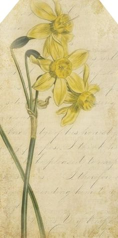"""""""Little flower,  but if I could understand what you are, root and all in all, I  should know what God and man is.""""   ~ Tennyson ~    """"Narr..."""