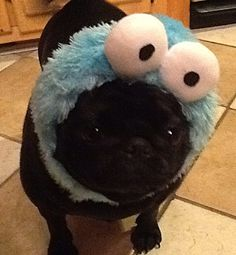 COOKIE MONSTER! :)
