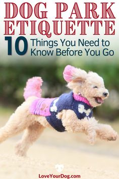 Unsure of proper dog park etiquette? We will go over everything you'll need to know to ensure that your pup is well behaved in the park. Potty Training Tips, Best Dog Training, Brain Training, Big Dog Little Dog, Big Dogs, Puppies Tips, Dogs And Puppies, Train Information, Positive Reinforcement