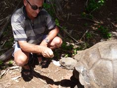 "Feeding Mrs ""T"" the last remaining Galapagos creature on Pitcairn Island. Pitcairn Islands, Creatures"