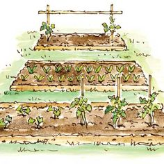 Care and Cultivation of Permanent Garden Beds Herb Garden, Garden Beds, Vegetable Garden, Organic Gardening, Gardening Tips, Mother Earth News, Garden Borders, Dream Garden, Permaculture