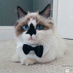 Oh..Cat...My man
