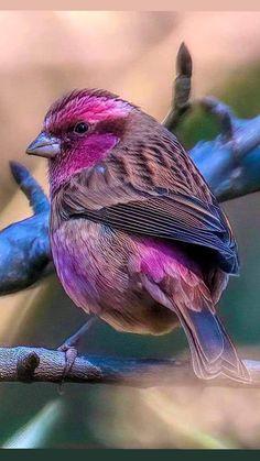 Funny Birds, Cute Birds, Pretty Birds, Wild Animals Pictures, Animal Pictures, Beautiful Creatures, Animals Beautiful, Animals And Pets, Cute Animals
