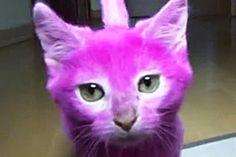 Il blog dei gatti