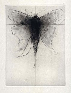 Amy Bucholz, Imaginary Moth, Dry Point  Pinned for the 'sketchy' style of dry point. Raw imagery.