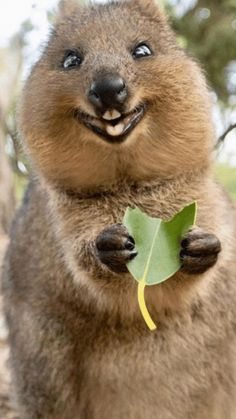 Happy Animal Picture : happy, animal, picture, Happy, Animals, Ideas, Animals,, Animal, Pictures