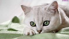 Ile lat miałby Twój kot gdyby był człowiekiem?   funandstory.blog.pl