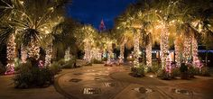 4. Coluimbia - Lights Before Christmas - Riverbanks Zoo & Gardens