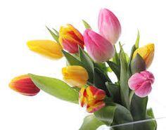 Resultado de imagen para imagenes de flores para imprimir gratis