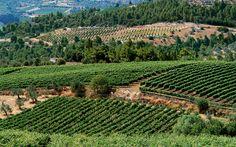 Grapeland - Greece Is
