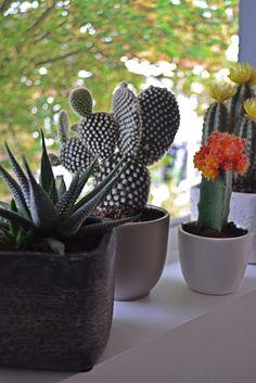 #Petite-amie #inspiratie #cactussen & #vetplanten voor in huis!