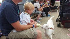 Bottle feeding goat kids at Farmer Palmer's Farm Park. Great kids days out in Dorset.