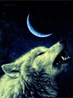 Wolf howling - can imagine the sound, I just LOVE it...
