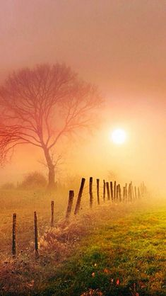 Sunrise, morning mist by Golden Hour Photography Landscape Photos, Landscape Photography, Nature Photography, Photography Tricks, Digital Photography, Learn Photography, Photography Lighting, Sunrise Photography, Morning Photography