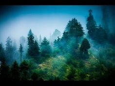 Zen Reiki Meditation Music: Relaxing Instrumental Music for Yoga, Massage, Meditation, Healing ☯071 - YouTube
