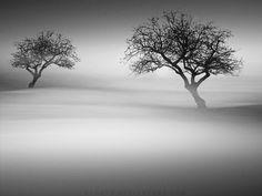 Misty Tree Sea by ~YahavT