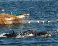 Taiji officials: Dolphin meat 'toxic waste' | The Japan Times