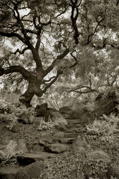 """""""Stone Path"""" by Geoffrey Agrons"""