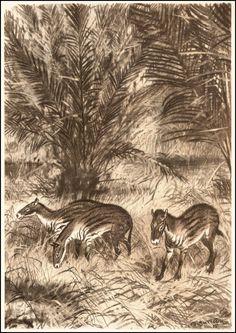 Eohippus | Zdeněk Burian (1905-1981) | Prehistoric Animals (1960)