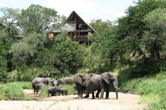 View of a suite at Lukimbi Safari Lodge, Kruger National Park, with elephant herd in river bed
