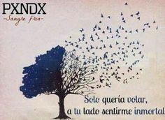 Pxndx-Sangre Fria