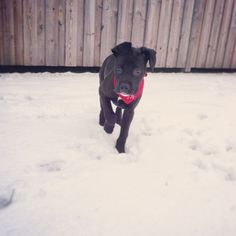 First Snow First Snow, Boxer, Dogs, Animals, Animales, Animaux, Doggies, Boxers, Animais