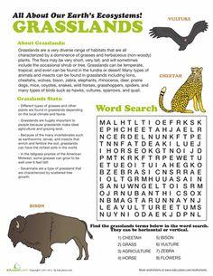 Worksheets: Grasslands Ecosystem