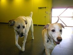 Capitol Canine Club offers pets a doggie day care experience with the same high quality of care that is expected from Old Dominion Animal Health Center.