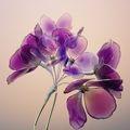 saion 紫陽花~薄香~ かんざし