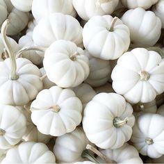 Pumpkins are so pretty!!! Photo: @livingwithlandyn #brightwhitewednesday